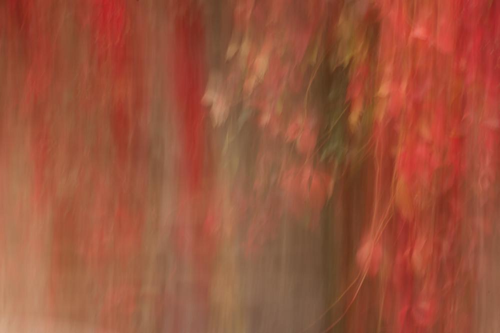 Autumnal Fall
