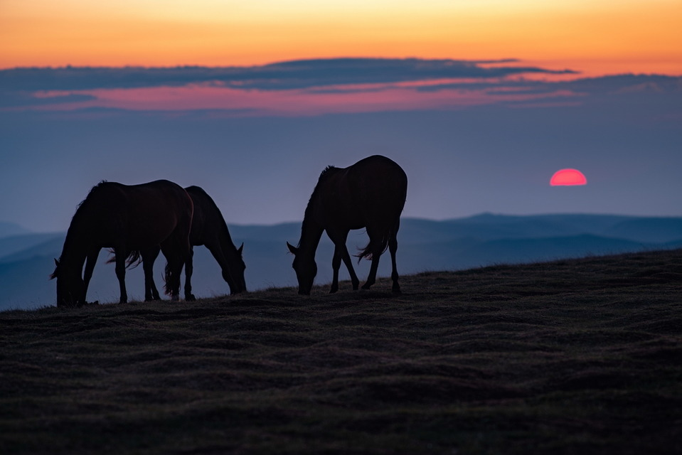 BERMAMYT HORSES