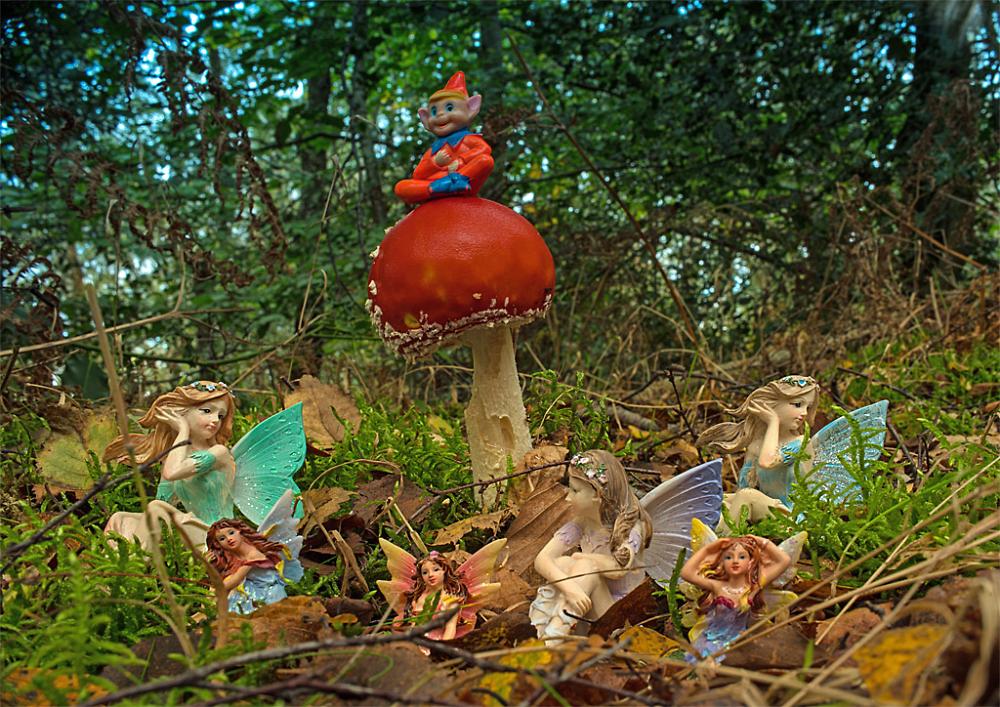 Fairy Glade