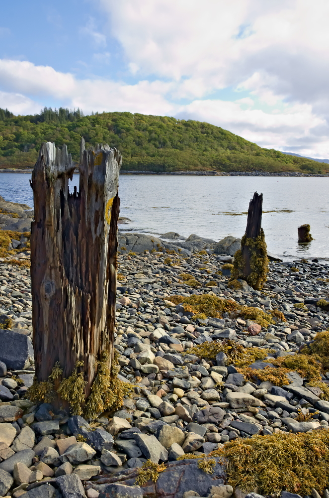 Weathered Posts