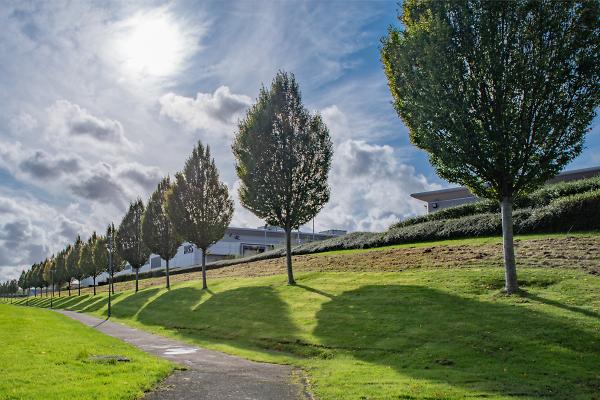 Shadows of trees: St Helens, Merseyside UK