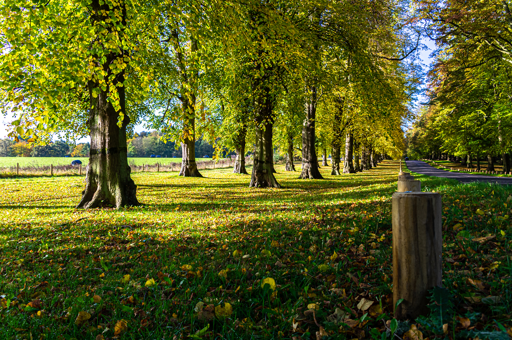 Autumn in Clumber Park