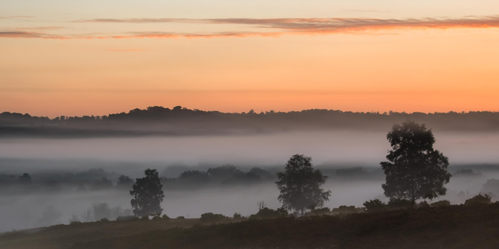 Misty Morning, New Forest
