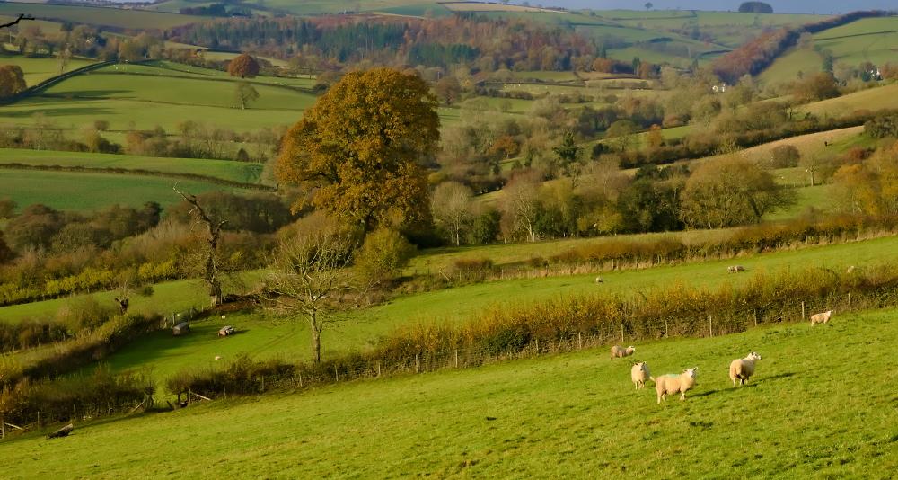 Shropshire Autumn