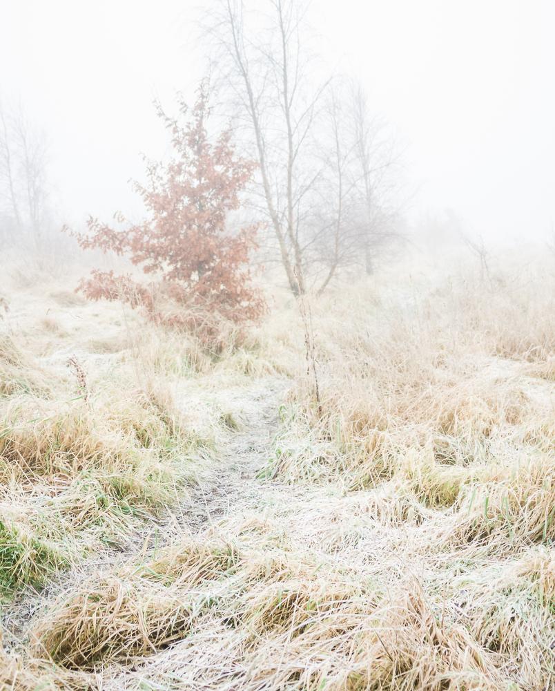 On a winters walk.