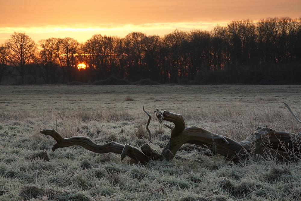 dead tree - no more...
