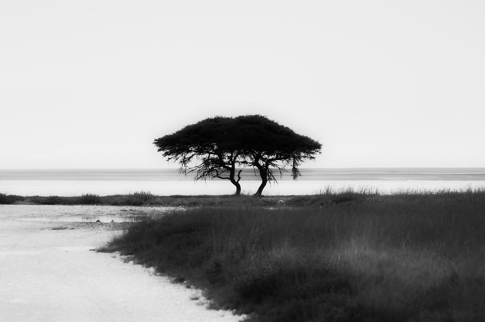 Etosha pan, Botswana