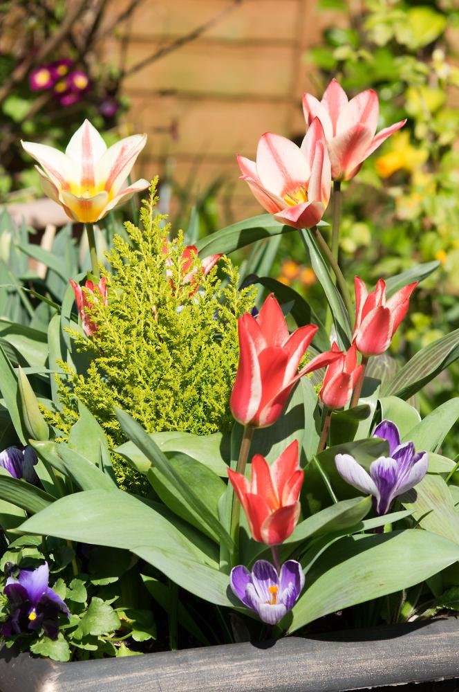 A Little Spring Colour......