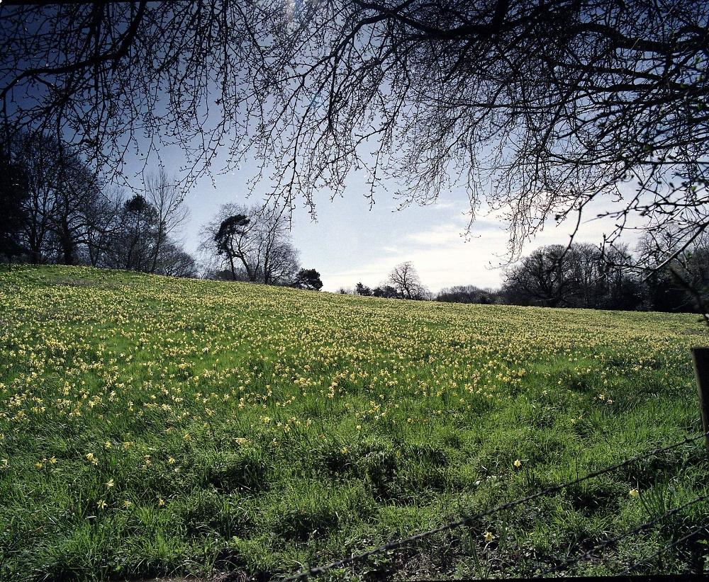 Spring arrives at  Warley Wildlife Reserve