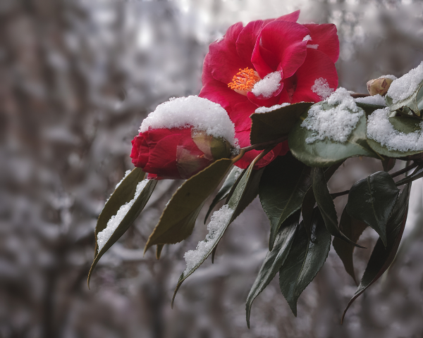 Snowing, again