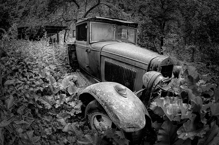 Car in the Orchard