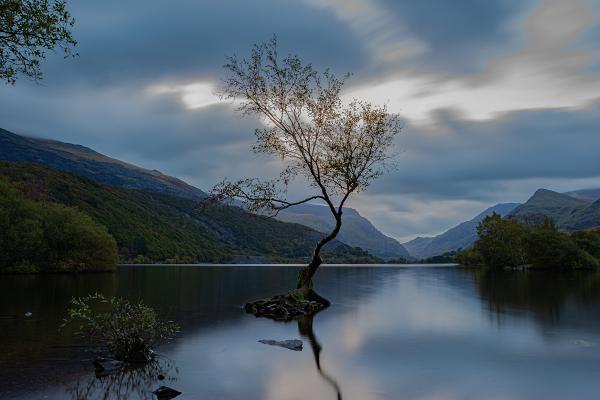 Lone tree at Llyn Padarn, Snowdonia