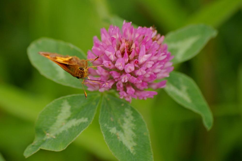 A Moth Macro