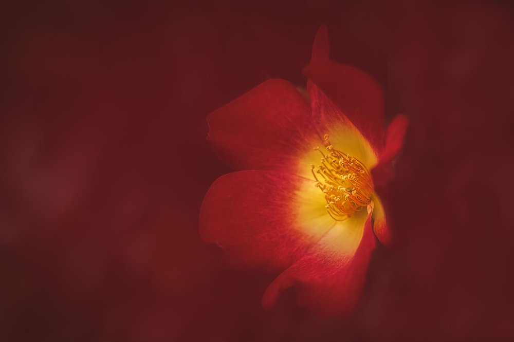 Yellow in red