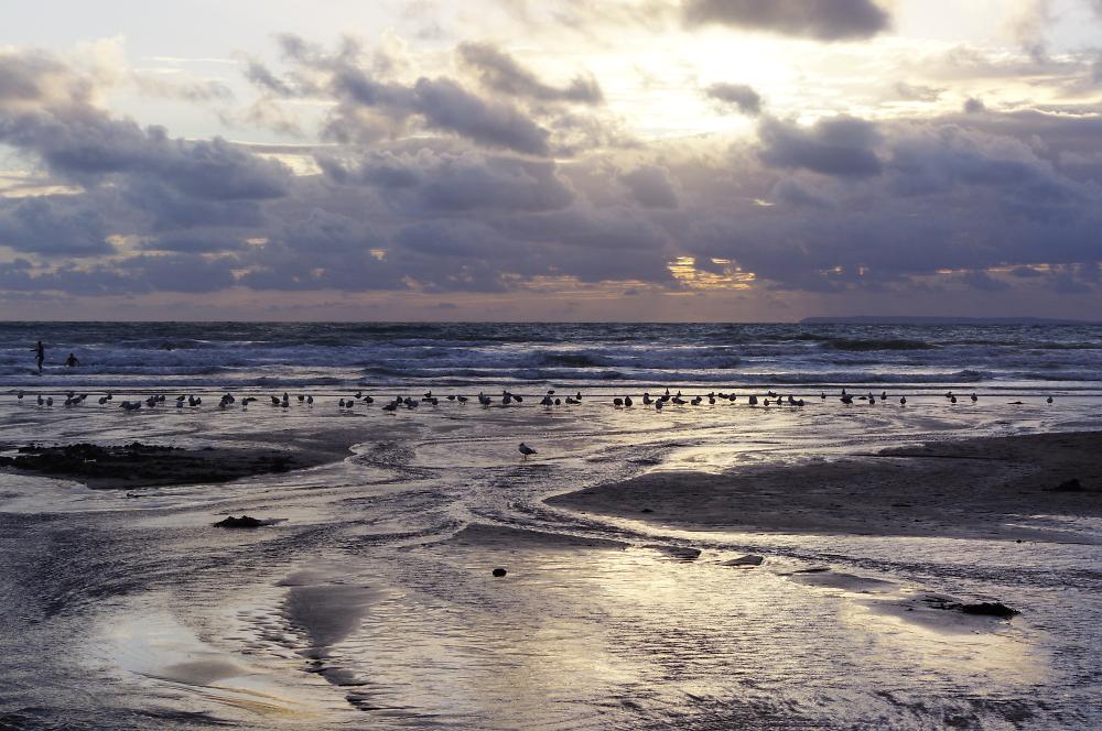 Bird's at Sunset