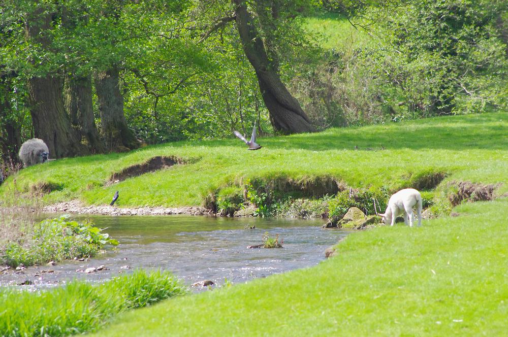 Mill race in Derbyshire