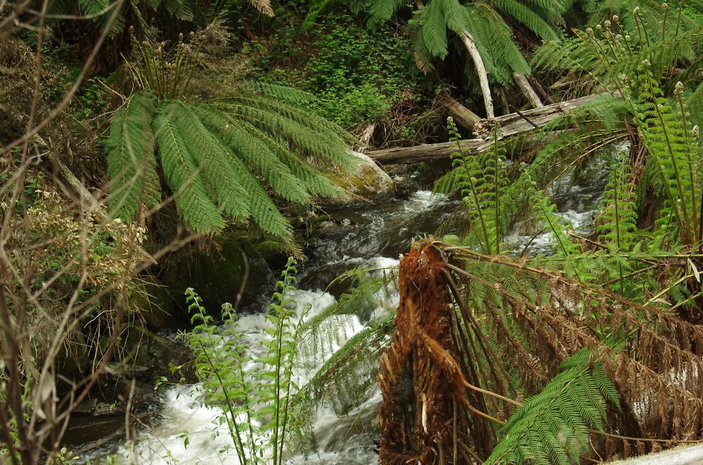 A hidden creek