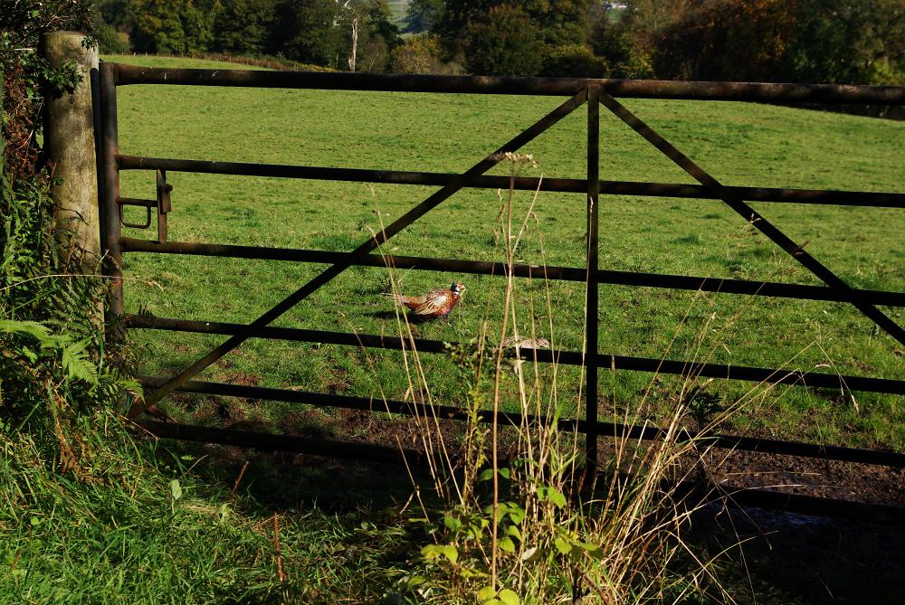 Pheasants Gate