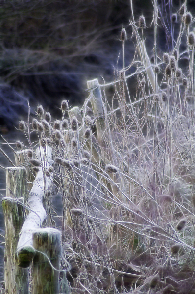 Cold rails and teasels