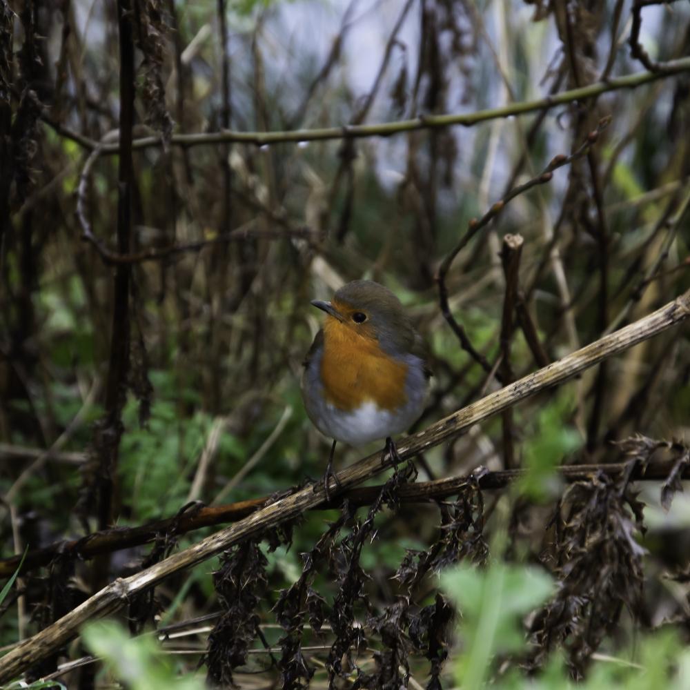 Lockdown Garden Bird Photography