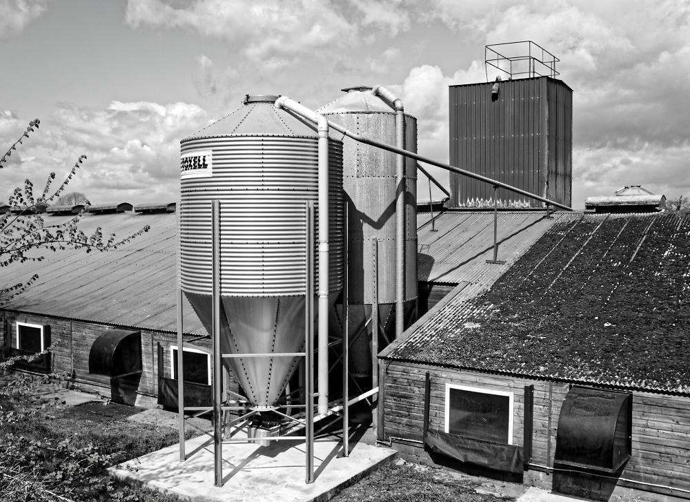 Chicken Raising Barn