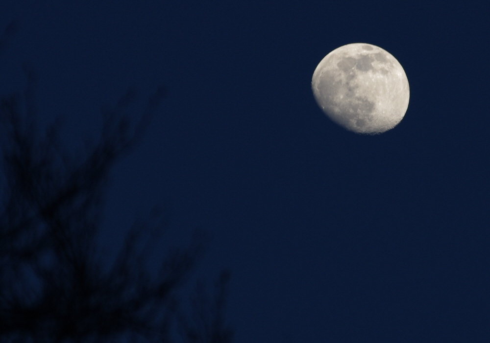March evening Moon