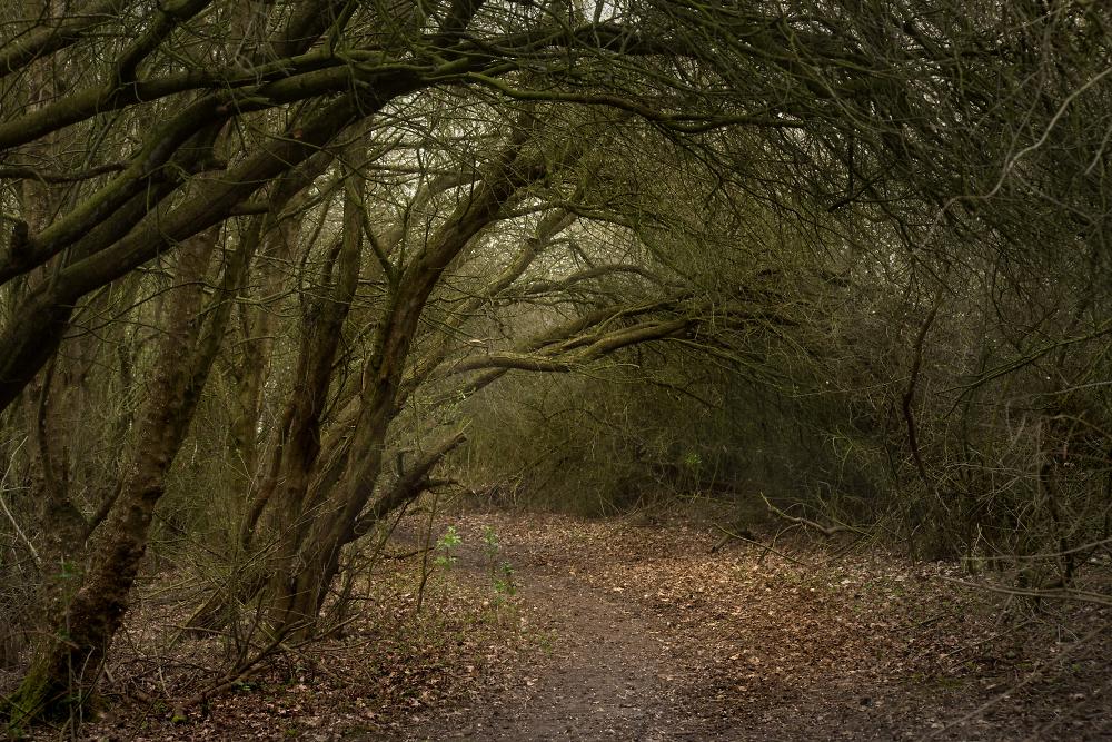 Spooky Tree Tunnel