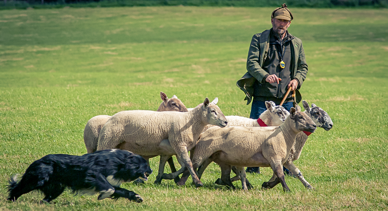 National Scottish Sheepdog Trails