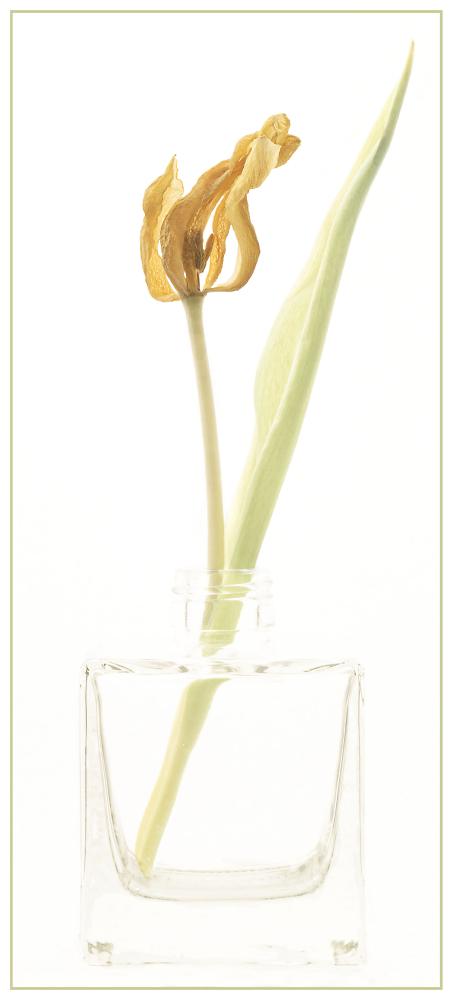 Ex tulip