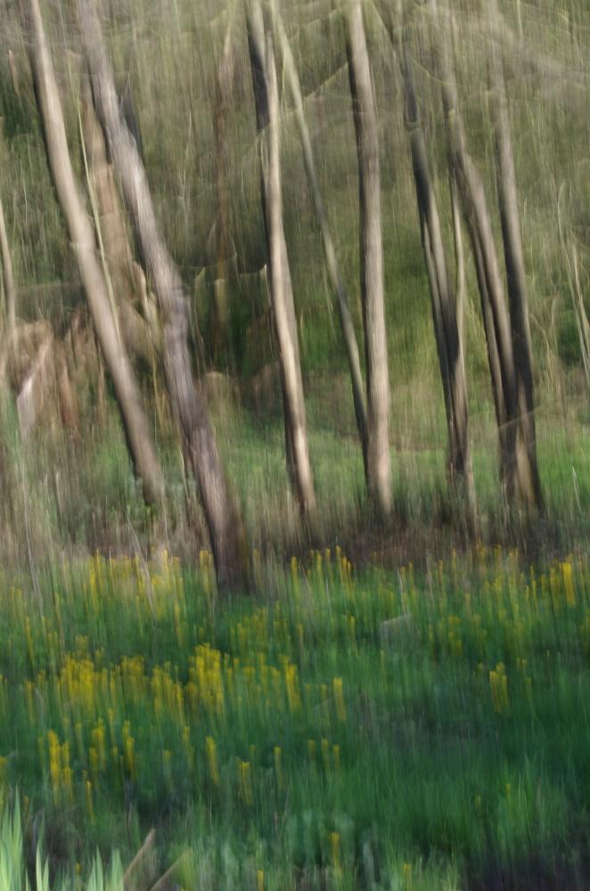 ICM riverside woods