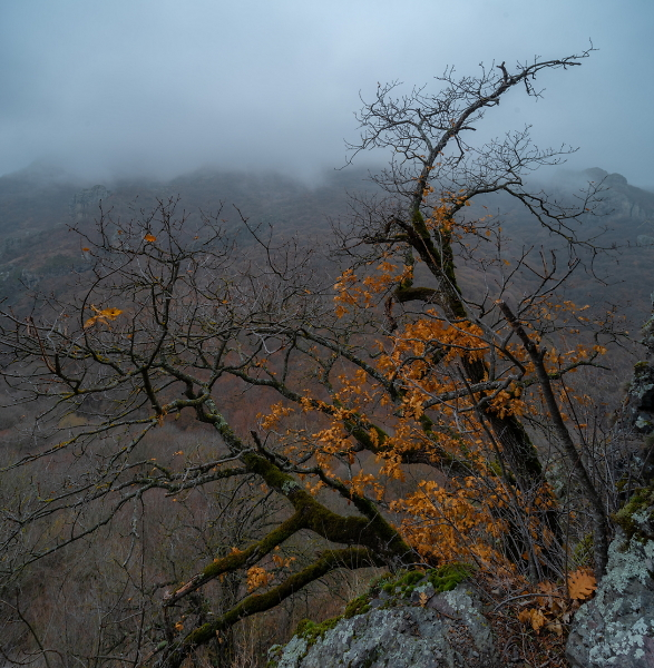 REMAINS OF AUTUMN