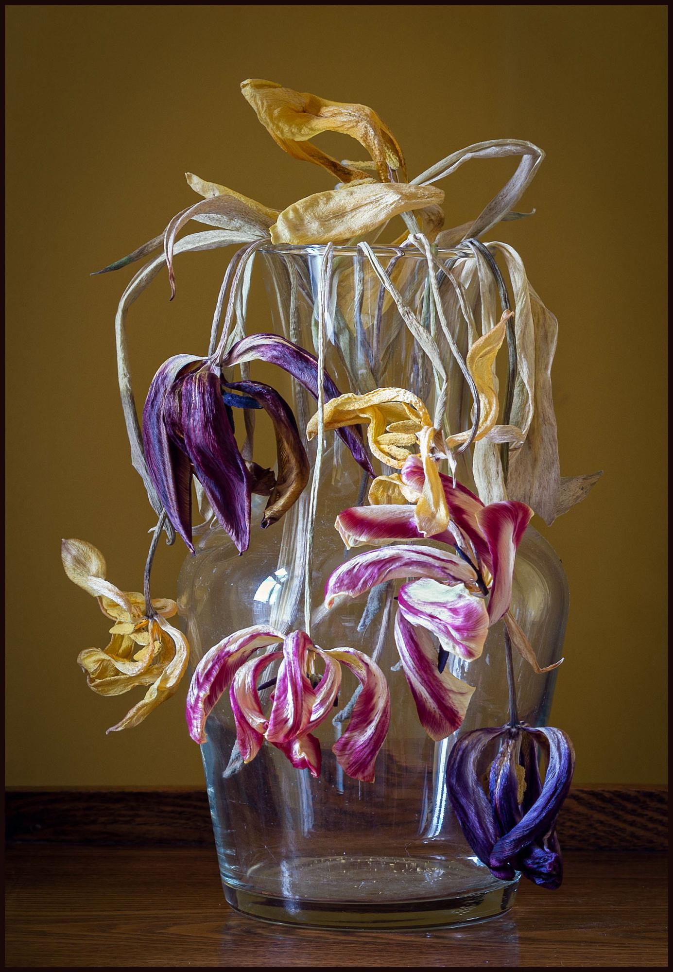 Bunch of dead tulips