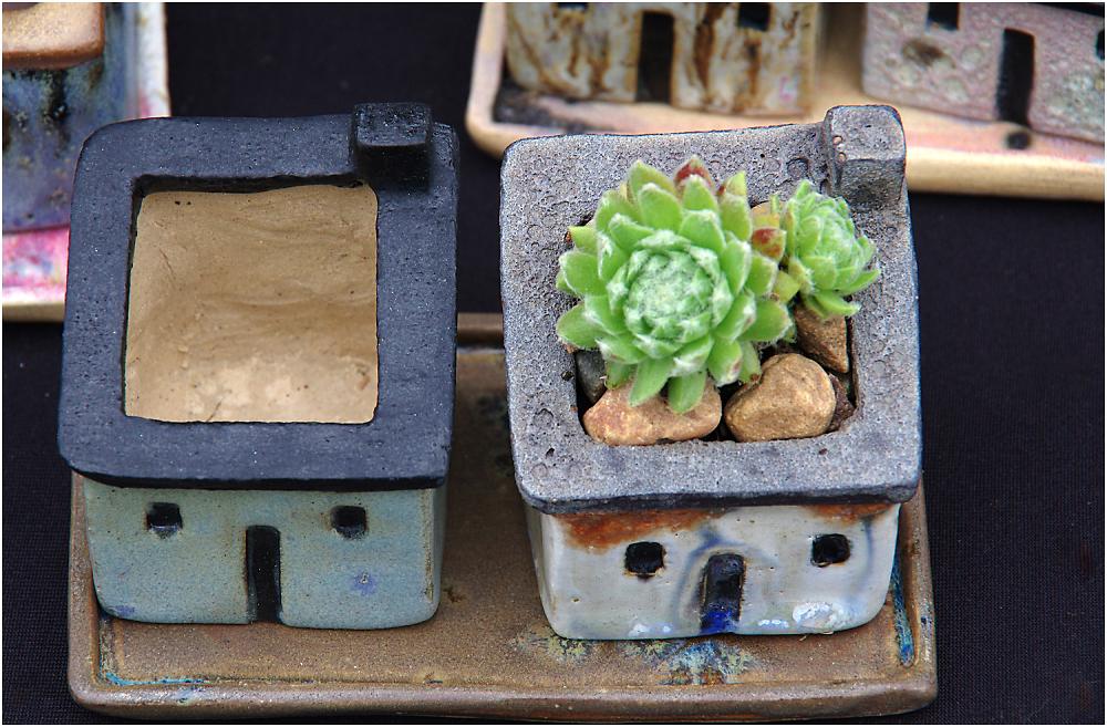 Cactus Roof Garden