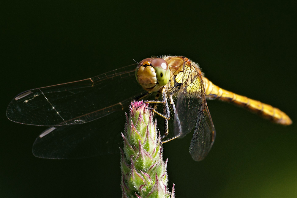 A Hawker (?) catching some rays at sunup