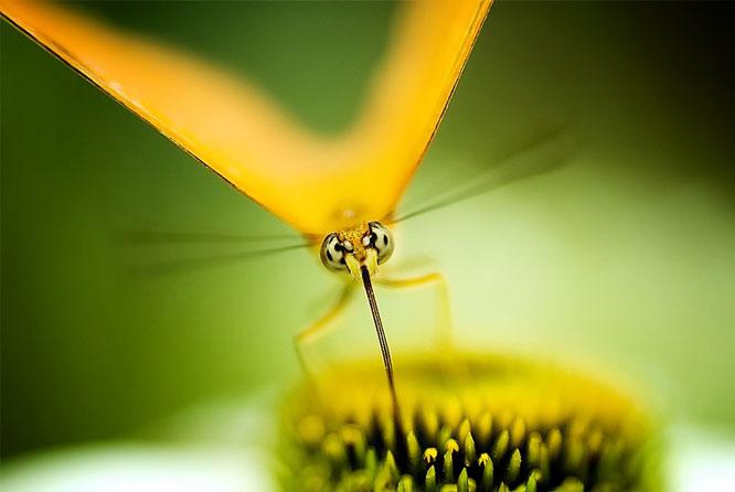 Sunshine Butterfly