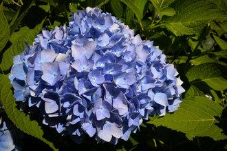 Nikon Coolpix A Flower Study | 1/160 sec | f/16.0 | 18.5 mm | ISO 200