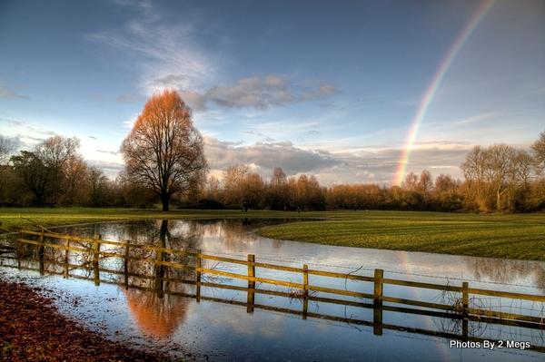 Rainbow Tree by 2megs